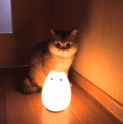 Ночной светильник Кот антистрес